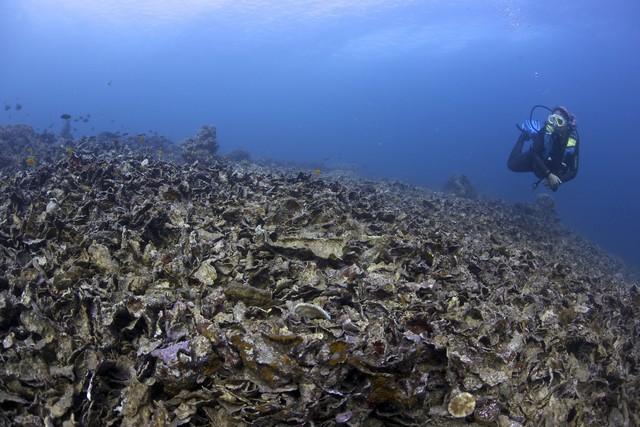Damaged Marine Sanctuary photo by Steve de Neef