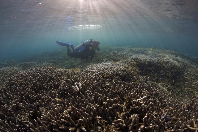 Dauin Marine Sanctuary photo by Steve de Neef
