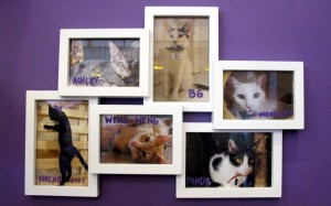 Some of Cat Cafe's friendly felines